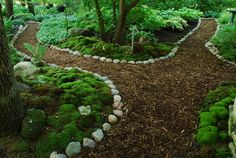 ss Garden with native Wisconsin mosses and over 250 varieties and species of ferns fro