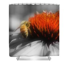 Cute little honey bee on a flower in black and white with partial color nature shower curtain.  Photography by Susan.