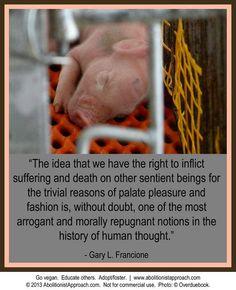 Vegan thoughts