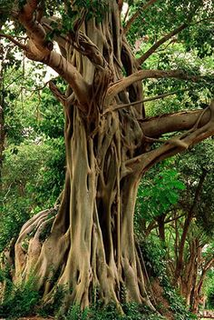 Bodhi Tree - to sit beneath and talk for hours