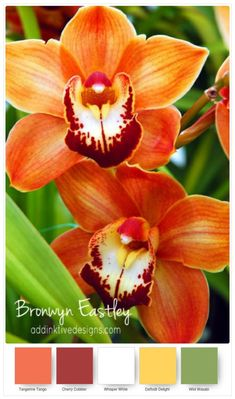Stampin' Up! Colour Combos for Paper Orchids – Part B – addinktive designs