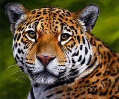 Endangered Jaguars – help stop the persecution