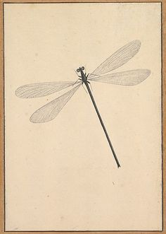 Nicolaas Struyck Dragonfly, early-mid 18th century, Amsterdam, MMA collection