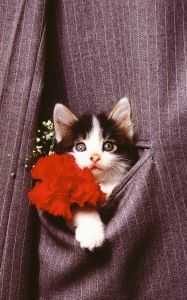 Preview wallpaper kitten, face, pocket, jacket 800x1280