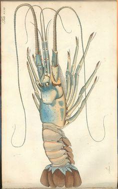 Versuch einer Naturgeschichte der Krabben und Krebse g by peacay, via Flickr