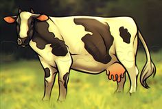 how to draw an oreo colored cow