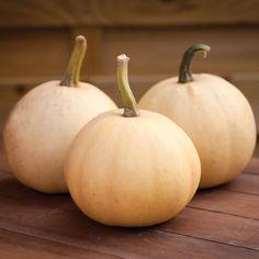 Squash 'Buffy Ball' F1 Hybrid (Winter) - Pumpkin, Squash & Courgette Seeds - Thompson & Morgan