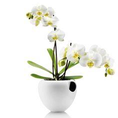 eva solo Orchideentopf Weiß  Der selbstbewässernde Orchideentopf von Eva Solo bietet Orchideen optimale Bedingungen, da sie ihren Wasserbedarf über einen Nylonfaden am Boden des Topfes selbst regulieren & nicht mehr täglich gegossen werden müssen. Einfaches Nachfüllen von Wasser.
