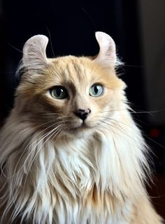 What a unique, beautiful cat this is!