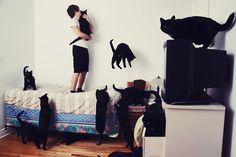 20 снимков разных людей, объединенных обожанием кошек