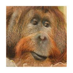 Orangutan portrait wood wall art - animal gift ideas animals and pets diy customize