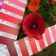 PMS Colour matching to Red! Pantone Black, Pms Colour, Colours, Projects, Red, Log Projects, Blue Prints