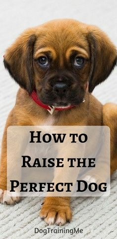 Dog Obedience Training: Do you want to know how to raise the perfect dog? Your dog can be well behaved a… – Sam ma Dog Training Dog Commands Training, Training Your Puppy, Dog Training Tips, Potty Training, Agility Training, Training Classes, Dog Agility, Brain Training, Training Online