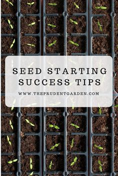 Gardening Tips Starting seeds in your garden is an attractive and cheaper option to grow your favorite plants but to do this successfully you'll need to learn some seed starting tips! Indoor Vegetable Gardening, Home Vegetable Garden, Organic Gardening Tips, Container Gardening, Flower Gardening, Gardening Books, Planting Flower Seeds, Planting Seeds Outdoors, Vegetable Ideas