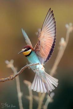 Lovely Bird Photogra beautiful amazing