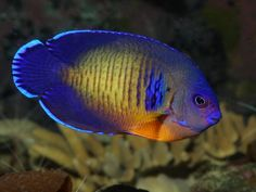 The Most Beautiful Saltwater Fish for Home Aquariums
