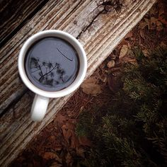 elorablue: Spotted this reflection of pine trees in my coffee...