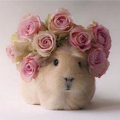 Guinea pig bouquet.