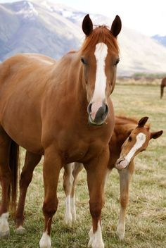 "Mare and foal. Foal looks like it is saying, ""Hey Mom, back here, don't forget me."""