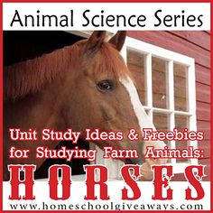Animal Science Series: Unit Study Ideas and Freebies for Studying Farm Animals: Horses! - Homeschool Giveaways - Animal Science Series: Unit Study Ideas and Freebies for Studying Farm Animals: Horses! Ag Science, Animal Science, Science Curriculum, Animal Activities, Science Classroom, Science Activities, Science Ideas, Farm Unit, Horse Camp