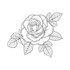 beautiful black and white rose and leaves. Floral arrangement isolated on backgr. beautiful black and white rose and leaves. Floral arrangement isolated on background. design greeting card and invitatio. Tattoo Stencils, Unique Tattoos, Art Drawings, Rose Drawings, Rose Outline Drawing, Drawing Art, Flower Tattoos, White Roses, Coloring Pages