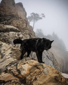 Wild Animals Pictures, Wolf Pictures, Animal Pictures, Beautiful Wolves, Beautiful Dogs, Animals Beautiful, Wolf Poses, Wolf Photography, Animal Totems