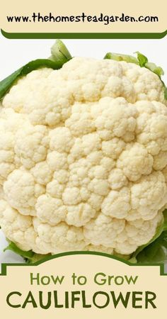 How to Grow Cauliflower,   Vegetables, Vegetable Garden, Fall Garden, Gardening, Tips, How to, Homesteading, Gardening, Cool Season Crops, Vegetable Cauliflower, Winter Garden