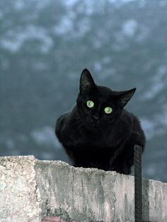 there's something about black cats!