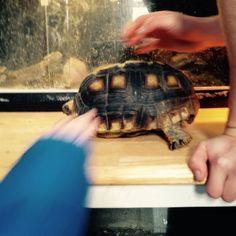 Tortoise Tortoise, Turtle, Animals, Tortoise Turtle, Turtles, Turtles, Animales, Animaux, Animal