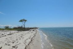This untouched Maryland gem is a little slice of paradise worth checking out.  Janes Island State Park, Crisfield