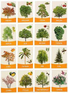 деревья картинки для детей с названиями: 10 тыс изображений найдено в Яндекс.Картинках Homeschool, Education, Nature, Plants, Image, Studying, Naturaleza, Plant, Onderwijs
