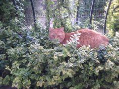 in my little backyard, hiding from paparazzi:)