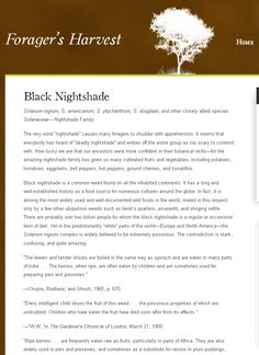 """Black Nightshade « Forager's Harvest - """"I began eating wild black nightshade berries at the age of twelve and have avidly sought them since. I have eaten the berries on many hundreds of occasions—sometimes more than a cup at a time. I eat them because I find them delicious."""""""