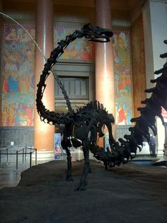 Brian Switek on Twitter: Even dinosaur giants started small. This is a baby Barosaurus @AMNH #FossilFriday