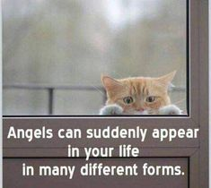 How cute is she funny cat images video memes quotes for cat lovers cat I Love Cats, Crazy Cats, Cute Cats, Adorable Kittens, Funny Cat Images, Funny Cats, Baby Animals, Funny Animals, Cute Animals