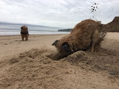 """Judy, & Betsy. on Twitter: """"I suppose you think that's funny Bettsy? Well I'm sure I buried a bone here last year!! https://t.co/slPdKPBPQM"""""""
