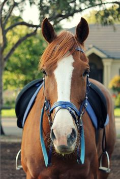 I love the blue detail of the bridle (and it looks like the saddle as well!) x