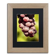 Trademark Global 'Homegrown Grapes' by Jason Shaffer Framed Photographic Print
