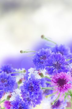 Great flower for a blue wedding theme - more ideas on my blog Blue Wedding Flowers, Wedding Bouquets, Calming Colors, Color Schemes, Bride, Plants, Blog, Ideas, Blue Flowers For Wedding