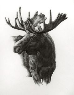 Moose, graphite on paper by Heather Theurer