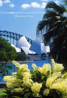View of the Sydney Harbour Bridge, the Opera House taken from The Royal Botanic Gardens, Sydney Australia