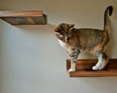 Like this instead of the cat tree