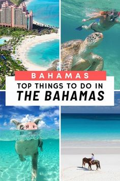 Top things to do in Bahamas! Discover the best things to do in #Bahamas with our trusted Bahamas Travel Guide. With 700+ islands in the Bahamas, make sure you leave #Nassau, Paradise island and New Providence behind and venture outward to the Bahamas Out Bahamas Resorts, Bahamas Beach, Bahamas Vacation, Nassau Bahamas, Cat Island Bahamas, Harbour Island Bahamas, Usa Travel Guide, Travel Usa, Stuff To Do
