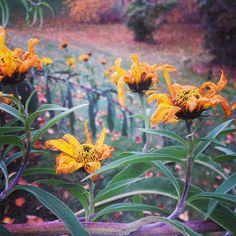 Wildflowers, Sunflowers, Wild Sunflower, Wildflower Seeds, Grow Your Own, Native Plants, Simple, Fall, Winter