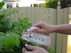 Homemade bug spray and other natural ways to control garden pests