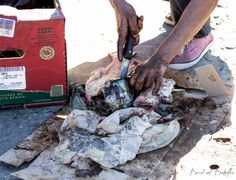 Fisherman preparing fish scraps to feed the seals at Hout Bay Harbour. Cape Town, Seals, Butterflies, Fur, Bread, Photography, Photograph, Seal, Fotografie