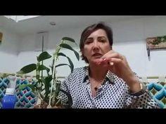 POR QUE O LEITE DE MAGNESIA FUNCIONA NO COMBATE AOS FUNGOS DAS ORQUIDEAS - YouTube