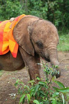 Baby elepahnt and mature elepant