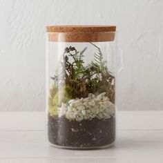 Inspired by old-fashioned specimen jars, this cork-capped terrarium is ideal for humidity-loving plants.- Glass, cork- Wipe clean with damp cloth- Indoor use only- Drainage hole not included- diameter Terrarium Containers, Terrarium Plants, Self Sustaining Terrarium, Air Plant Display, Interior Decorating Styles, Hanging Planters, Hanging Terrarium, Floral Bouquets, Houseplants