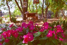 Foto by Sue Ibars Boda flor de la alegría